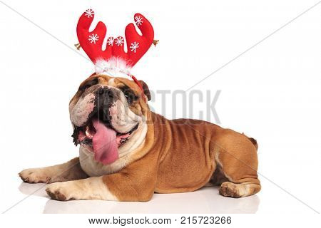 side view of a english bulldog wearing red reindeer horns celebrating christmas with mouth open, sticking out tongue on white background