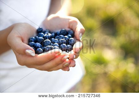 Blueberries in the hands of farmers, women's hands. Fruits, berries, food, nature