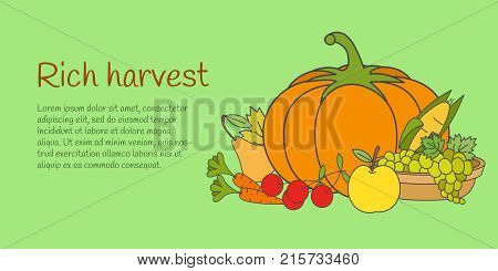 Rich autumn harvest banner. Group of ripe vegetables and fruits flat vector isolated on white background. Raw natural vegetarian products illustration for harvest festival flyer, organic farm web page