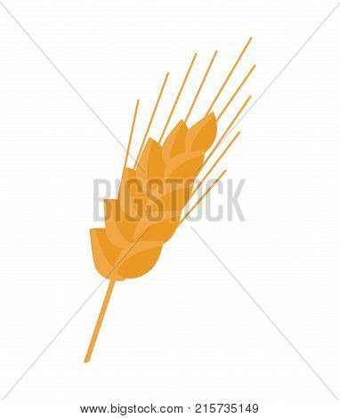 Ear grain-bearing tip part of stem of cereal plant, such as wheat or maize vector illustration isolated on white background. Icon of organic bread piece