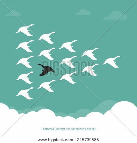 Flock of a duck flying in the sky. Teamwork Concept and Difference Concept.. Wild duck.