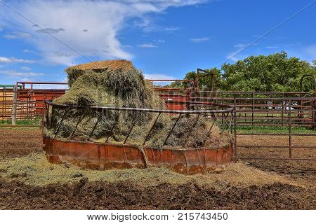 Round metal hay manger in a feedlot is filled with opened round bales of hay.