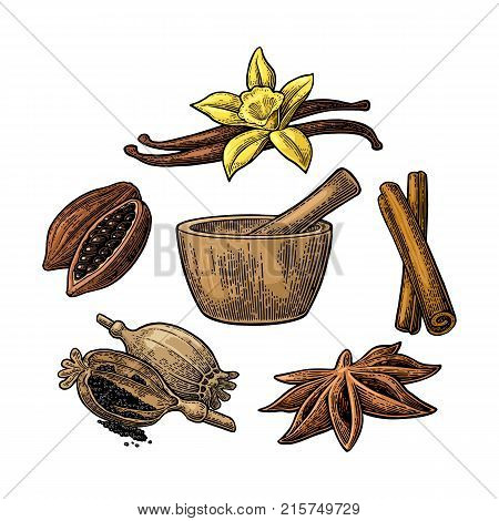 Set of Spices, Mortar and Pestle. Anise star, cinnamon stick, fruits of cocoa beans, vanilla stick and flower, poppy heads and seeds. Isolated on white background. Vector color vintage engraving.