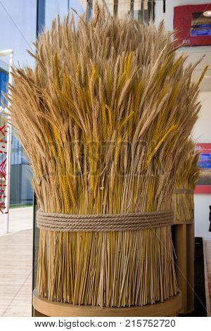 Sheaf of Wheat Ripe Ears Wheat Set.