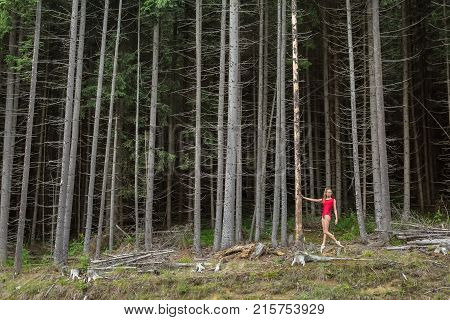 Delightful ballerina posing near the dry pine on the background of the coniferous forest. She wears a red leotard and light ballet shoes. Girl holds right hand on the pine and looks to the side.