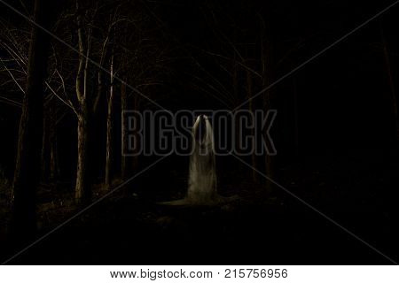Ghost In The Dark Forest