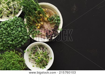Assortment of micro greens at black background, copy space, top view. Kale, alfalfa, sunflower and other sprouts in bowls. Healthy lifestyle, stay young and modern restaurant cuisine concept