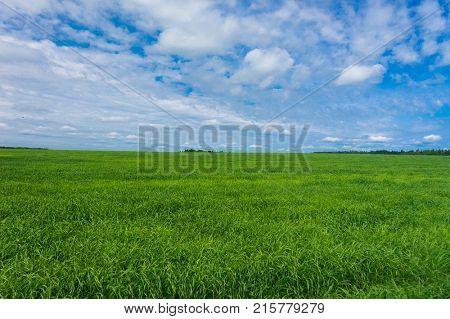 Field Freedom Grass Lawn
