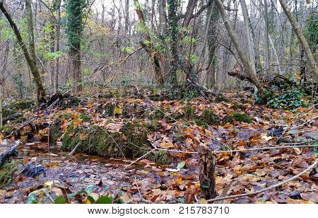 Beautiful autumn forest. Forest spring with clearwater. Natural landscape.