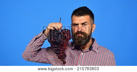 Winegrower With Seductive Face Holds Cluster Of Grapes Near Face