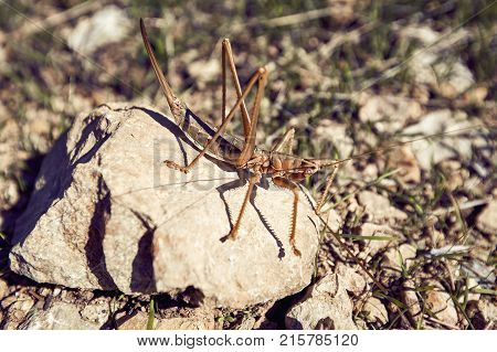 A large insect is a real grasshopper natural.