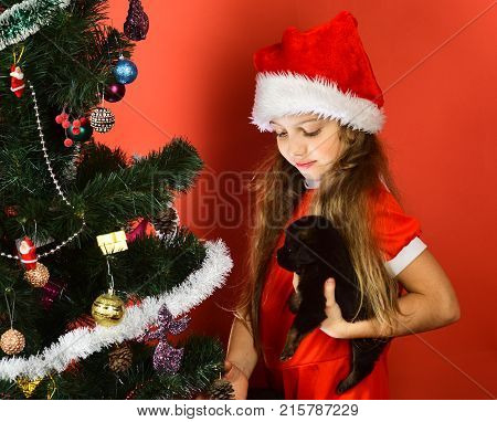 New Year Of Dog Concept. Miss Santa Holds Little Dog