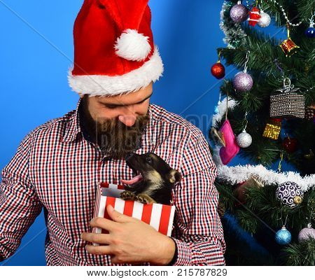 Guy With Calm Face Unpacks Present Box With Yawning Puppy
