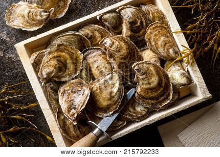 Delicious raw fresh oysters in wood packing crate with shucker and seaweed.