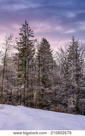 Forest In Hoarfrost On Snowy Hillside At Dawn