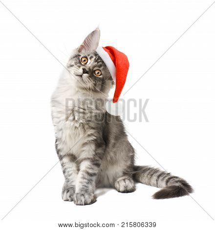 Kitten in red hat on white background