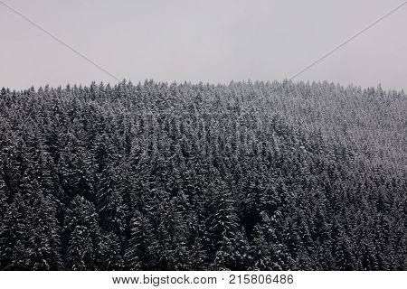 Amazing fogy forest details in Germany - Schwarzwald.