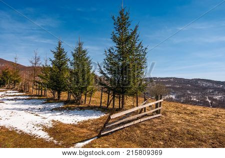 Spruce Trees Near The Fence On Hillside