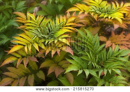Colorful fern leaves in autumn. Close up view.