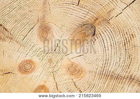 Wood structure background. Lumber industrial wood texture timber butts background. Butt end of a processed wooden beam. Glued beams