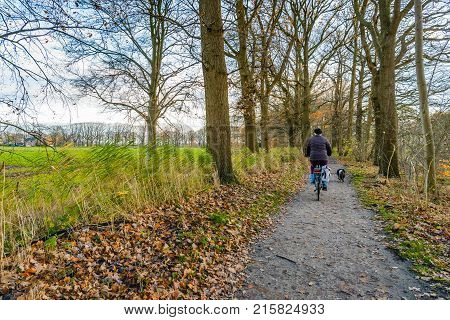 Older woman is cycling on a sandy path between the trees and her dog is walking forward. It is a cloudy day in the autumn season.
