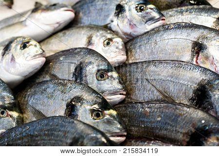 Rows Of Fresh Sea Bream Fish At Market