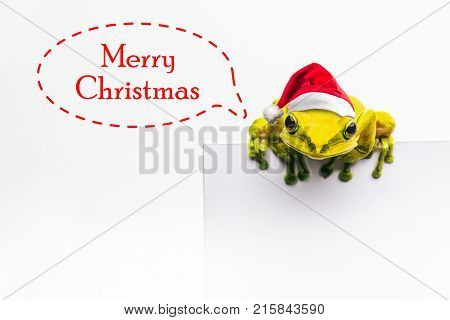Frog With Christmas Hat Isolated On White Background