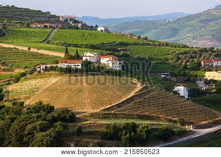 Douro Valley, Portugal. Top view of vineyards are on  hills.