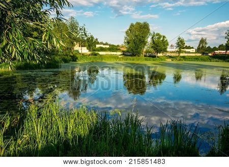 A marshy landscape on a summer day with duckweed on the surface of the water