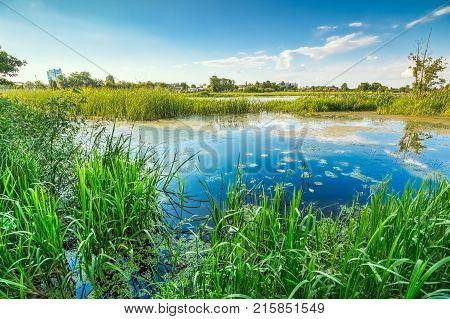 The wetland part of the river on a summer day with marsh grass in the water and duckweed