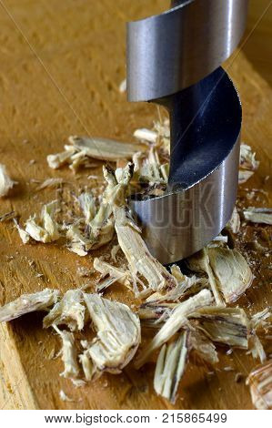 Drilling wood. Vertical close up of wood drill bit and shavings.