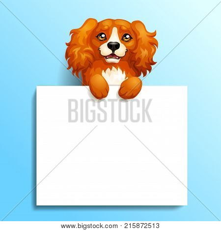 The red dog Cocker Spaniel stands with paws on a white banner or a poster on blue background. A vector illustration in cartoon 3d style.