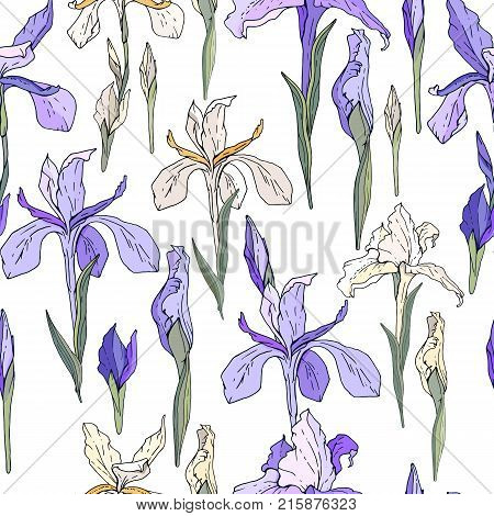 Seamless Season Pattern With Blue And White Irises. Endless Texture For Floral Summer Design With Fl