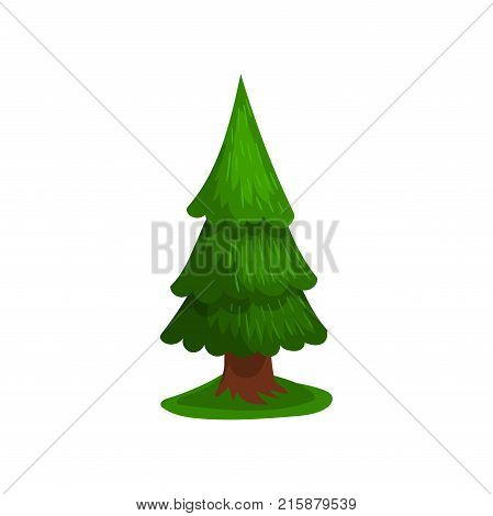 Green coniferous tree vector Illustration isolated on a white background