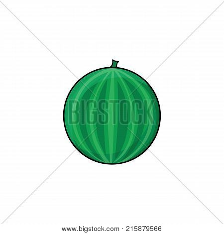 vector flat sketch style striped fresh ripe watermelon. Isolated illustration on a white background. Healthy vegetarian eating, dieting and lifestyle design object.