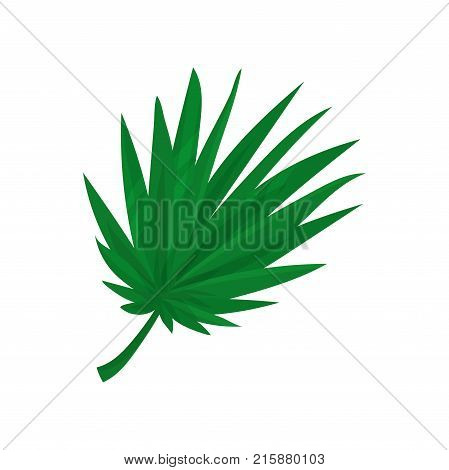 Green fan palm leaf vector Illustration isolated on a white background