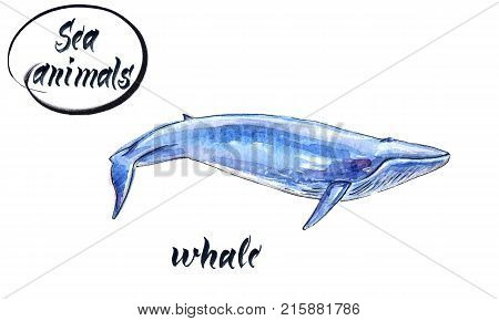 Sketch blue whale. hand drawn watercolor illustration