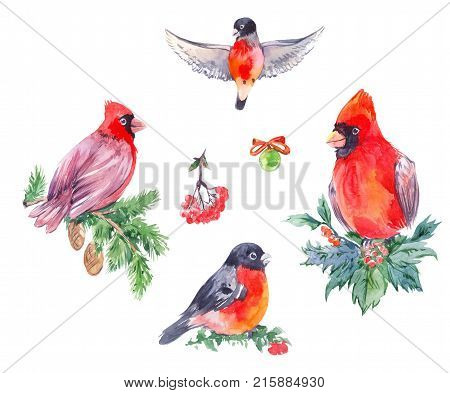Watercolor illustrations of cristmas birds. Red Cardinal bullfinches. Hand drawn winter set isolated on white.