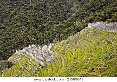 Winay Wayna Terraces