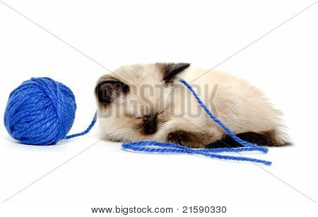 Cute Kitten With Blue Yarn