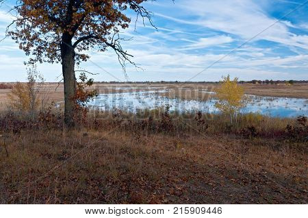 oak tree at edge of prairie wetland at necedah wildlife refuge in juneau county wisconsin