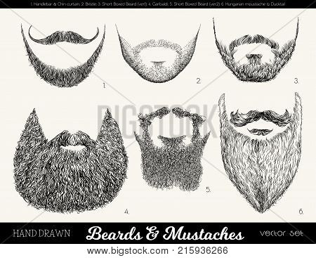 Vector set with beards and mustaches. Hand drawn illustration with fashionable men's styles. Linear Graphics. Kinds and names of beards