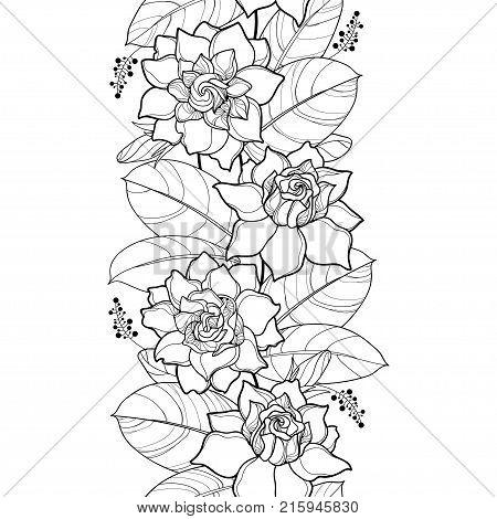 Vector seamless pattern with outline Gardenia. Ornate flower, bud and leaves in black on the white background. Floral vertical border with contour Gardenia for summer design and coloring book.