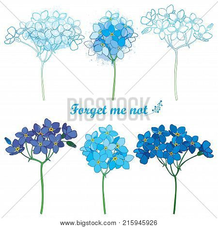 Vector set with outline Forget me not or Myosotis flower bunch in pastel blue isolated on white background. Wild plant Forget me not in contour style for spring design or romantic decor.