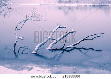 Submerged Winter Tree Branches