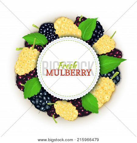 Round colored frame composed of delicious mulberry fruit, Vector card illustration. Mulberry berries fresh and juicy Circle frame for design of food packaging juice breakfast cosmetics tea detox diet