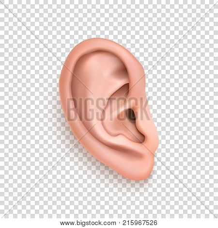 Vector realistic human ear icon closeup isolated on transparency grid background. Design template of body part, human organ. EPS10 illustrarion.