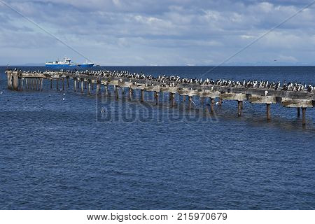 Historic waterfront of Punta Arenas running along the Magellan Strait in Patagonia, Chile. Imperial Cormorants on an derelict pier.