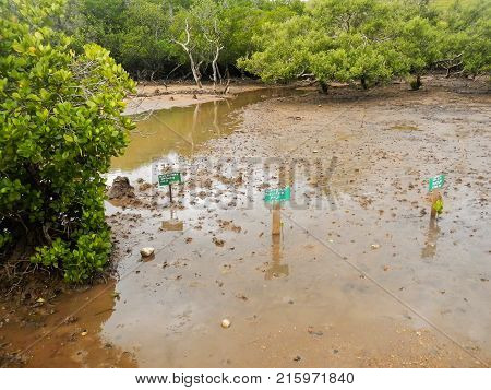 Rinca, Indonesia-march 15: Mangrove Sprouts Next To Board With Name Who Planted Them On Rinca On Mar