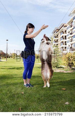 Dog Handler Training Australian Shepherd Outdoors Park